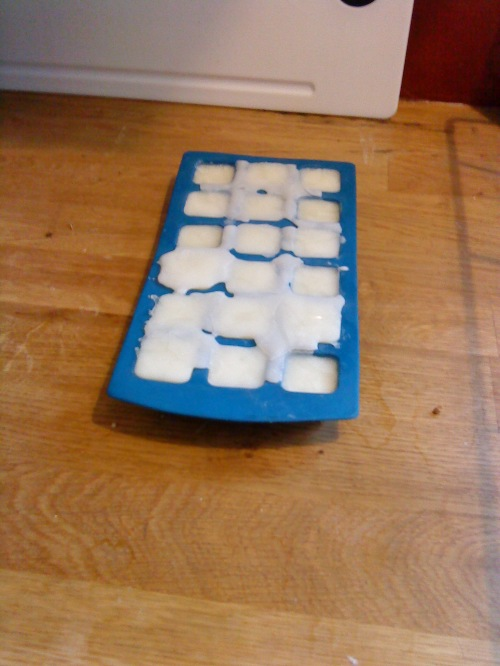 cheese starter in icecube tray